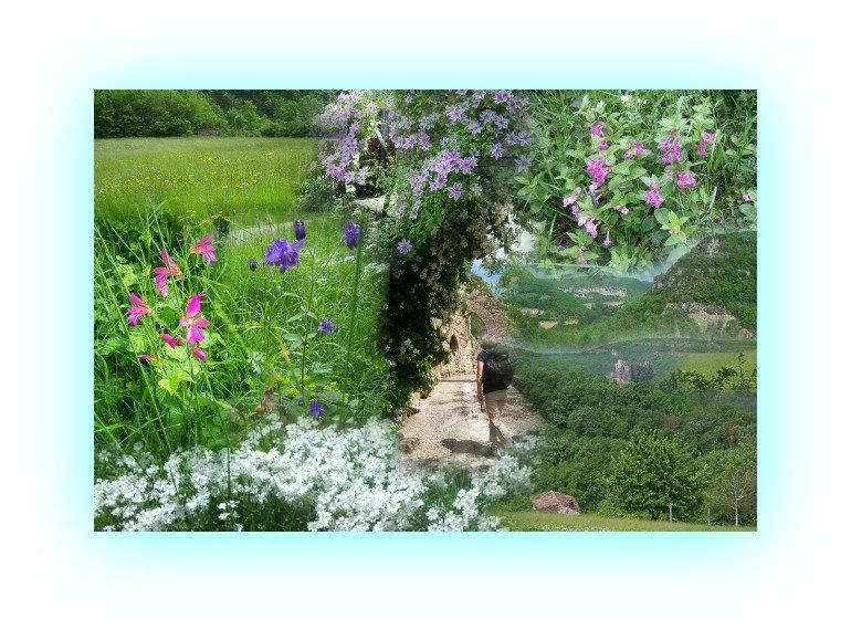 fleursdepenne.jpg